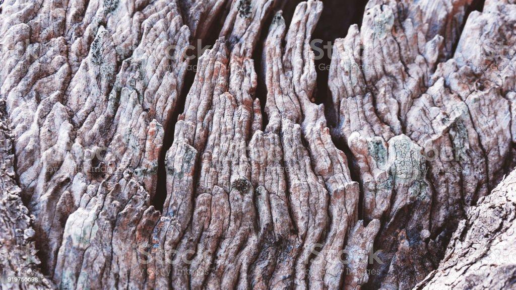 Bark of olive tree stock photo