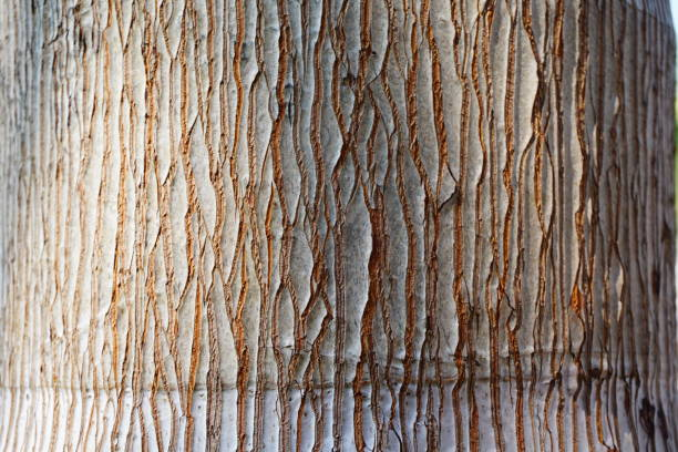 bark of pine tree texture brown - natural pattern stock photos and pictures