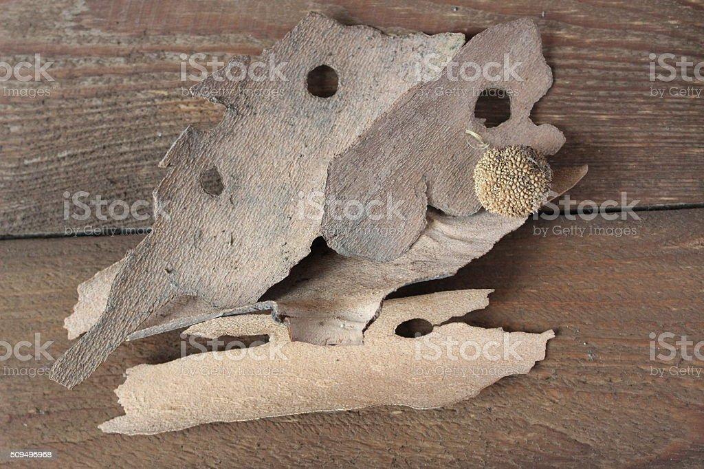 Bark of sycamore stock photo