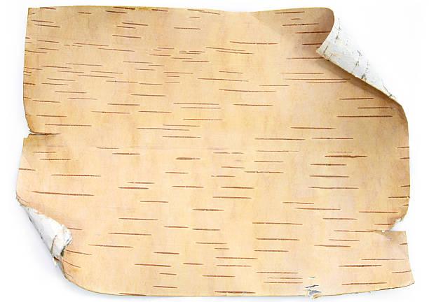 kory birch-bacground - wood texture zdjęcia i obrazy z banku zdjęć