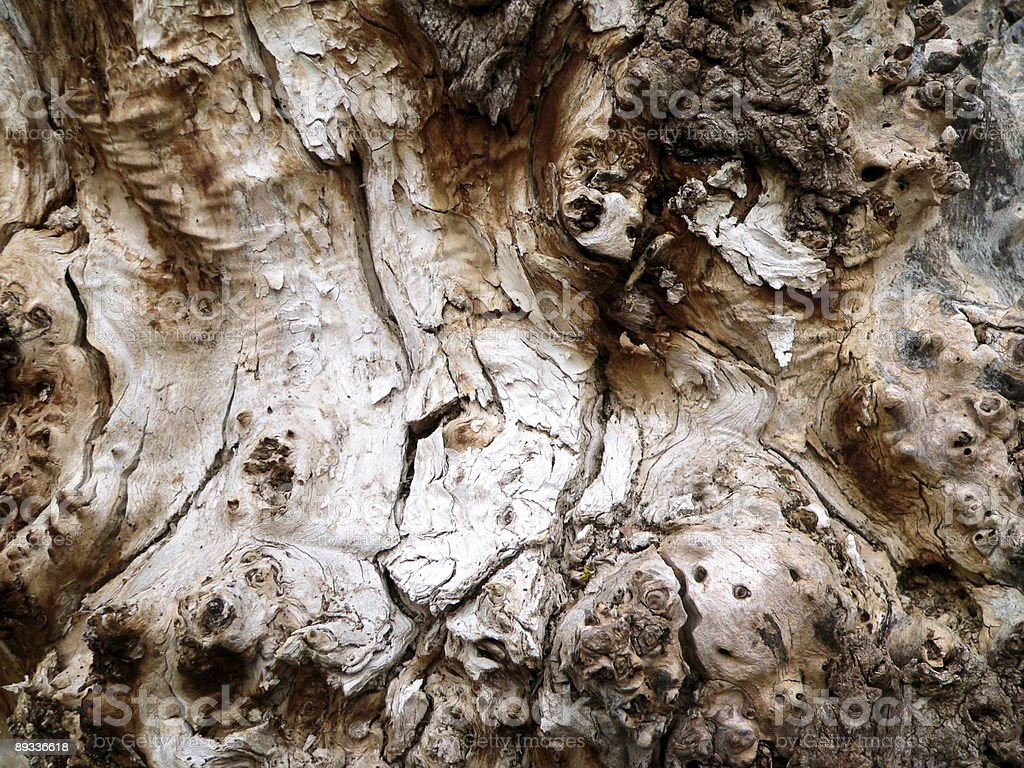Bark of the old tree 2 royalty-free stock photo