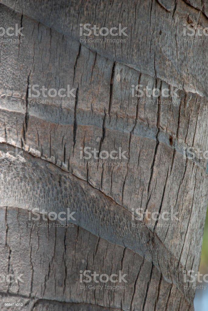 Rinde der Palme - Lizenzfrei Baum Stock-Foto