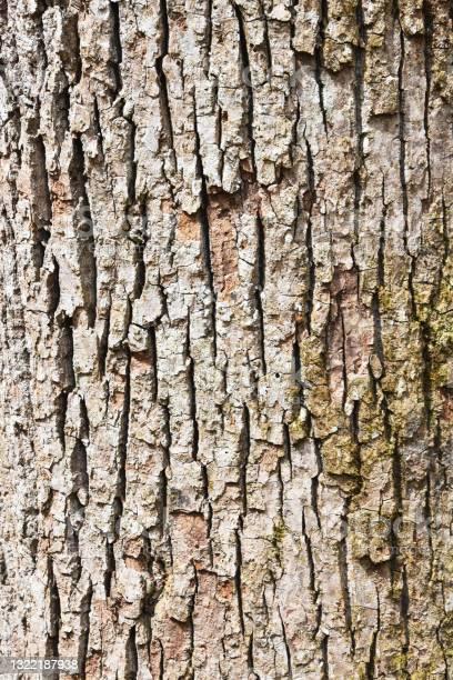 Photo of Bark of the Tree