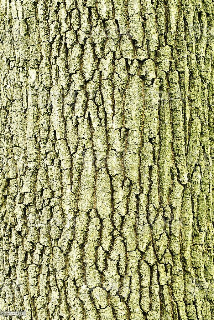 Bark of the tree stock photo