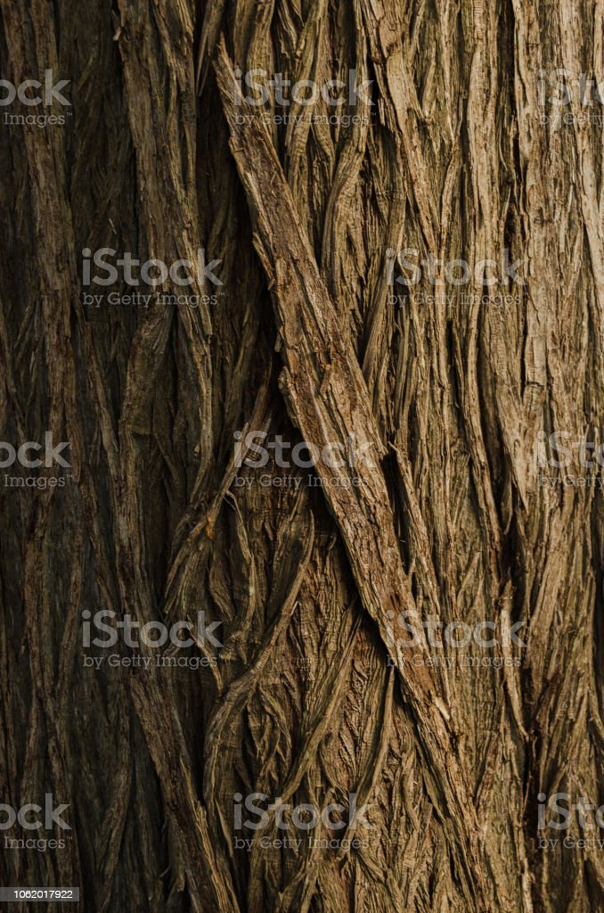 bark of tree, close up to the trunk of a tree, pattern of nature stock photo
