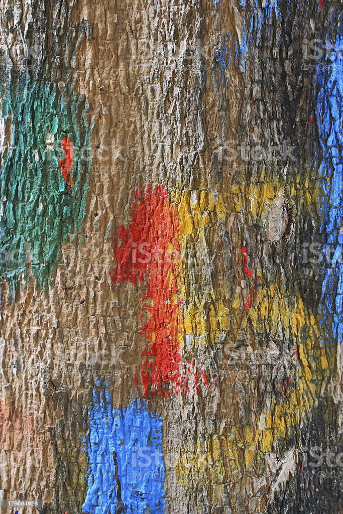 Bark of tree royalty-free stock photo