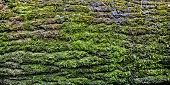 istock Bark of  tree 862346278