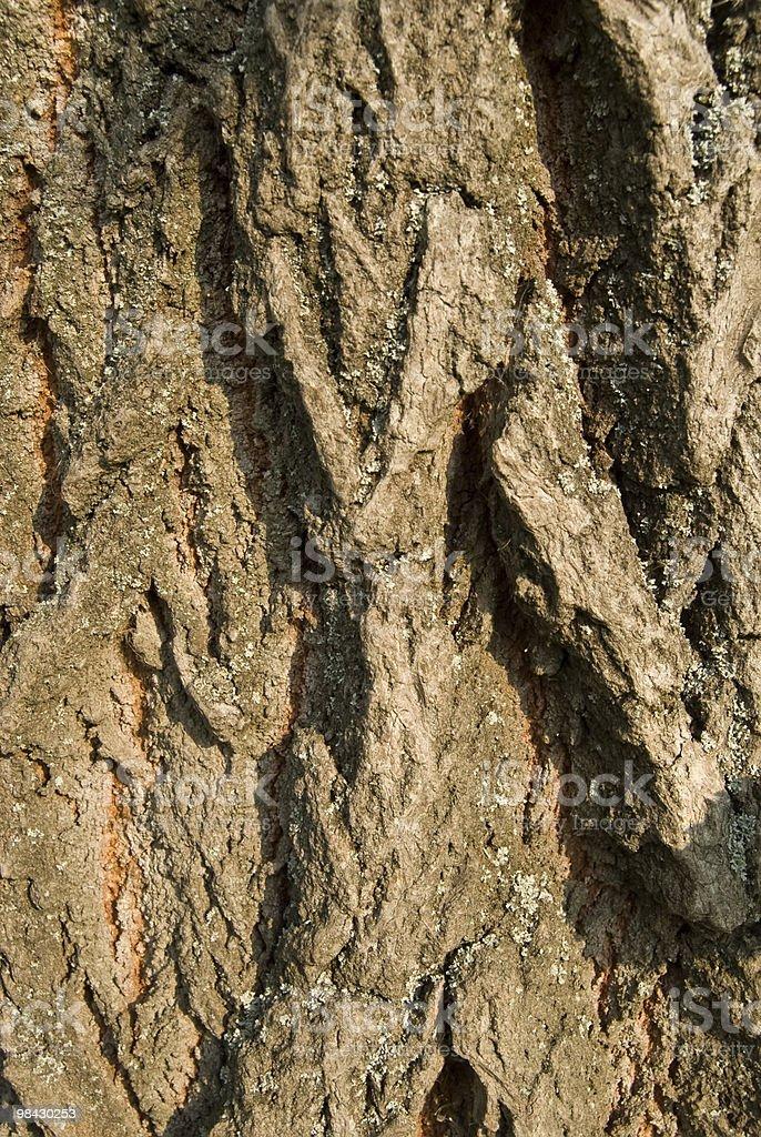 bark of tree royalty-free stock photo