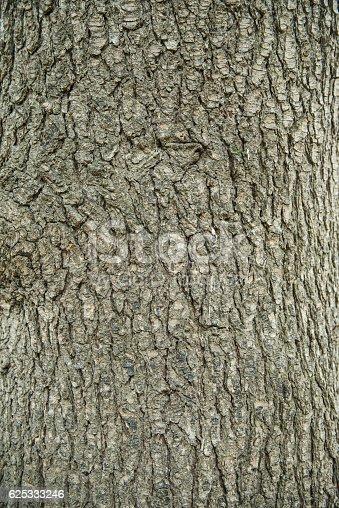 1200139538 istock photo Bark of tree pine closeup 625333246