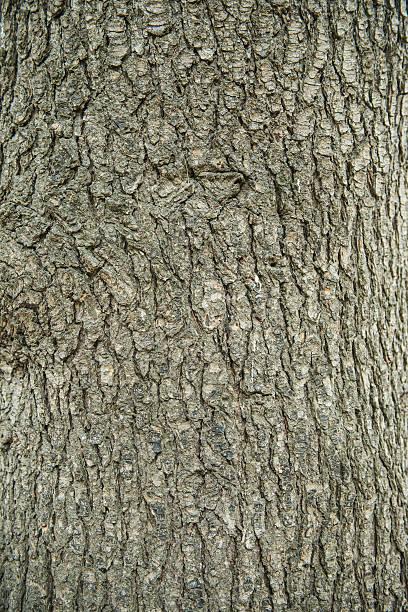 bark of tree pine closeup - treibholz wandkunst stock-fotos und bilder