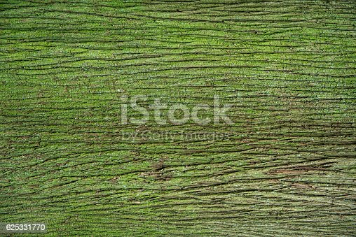 1200139538 istock photo Bark of tree pine covered with green moss 625331770