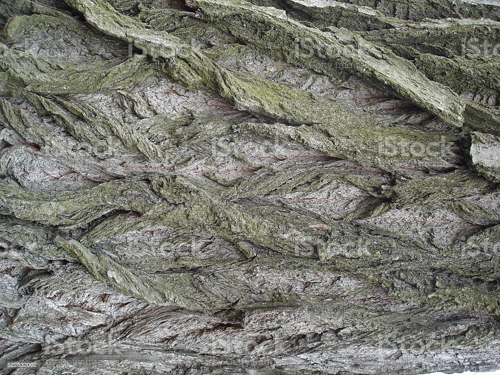 Bark of tree with moss stock photo