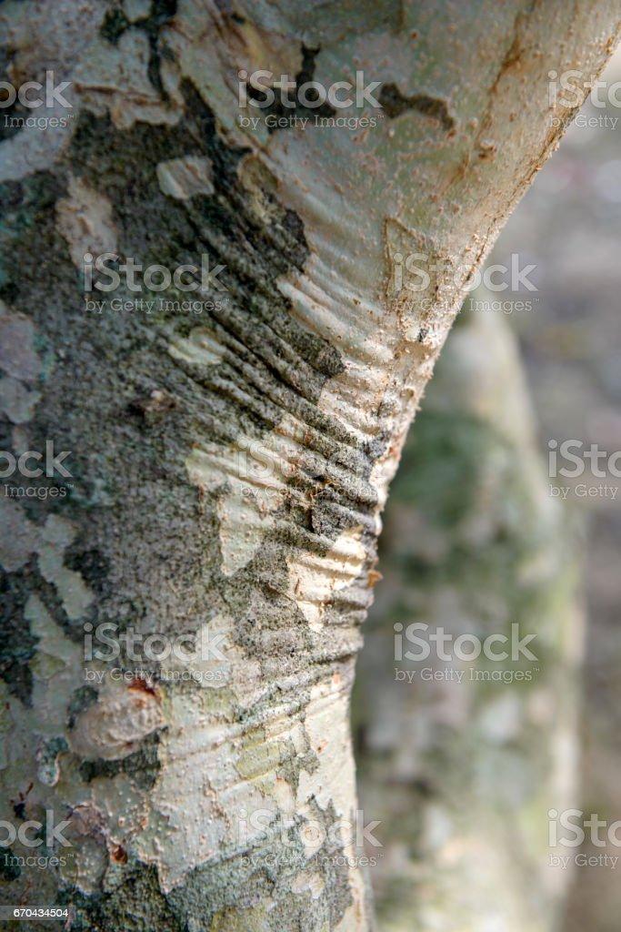 bark old is beautiful stock photo
