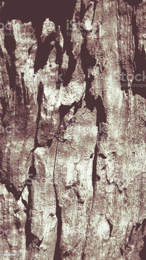 bark olive tree Lizenzfreies stock-foto