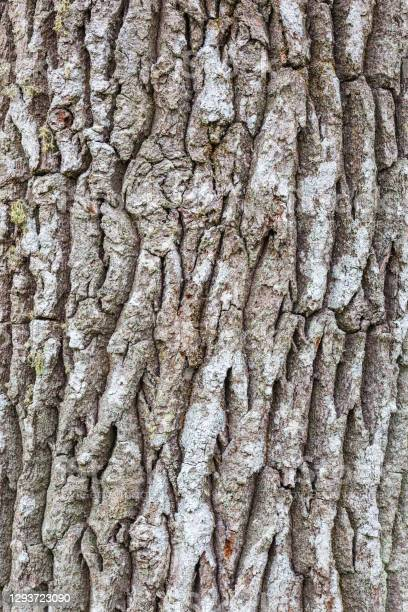 Photo of Bark on an old tree