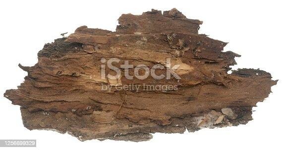 Back side of bark on white background