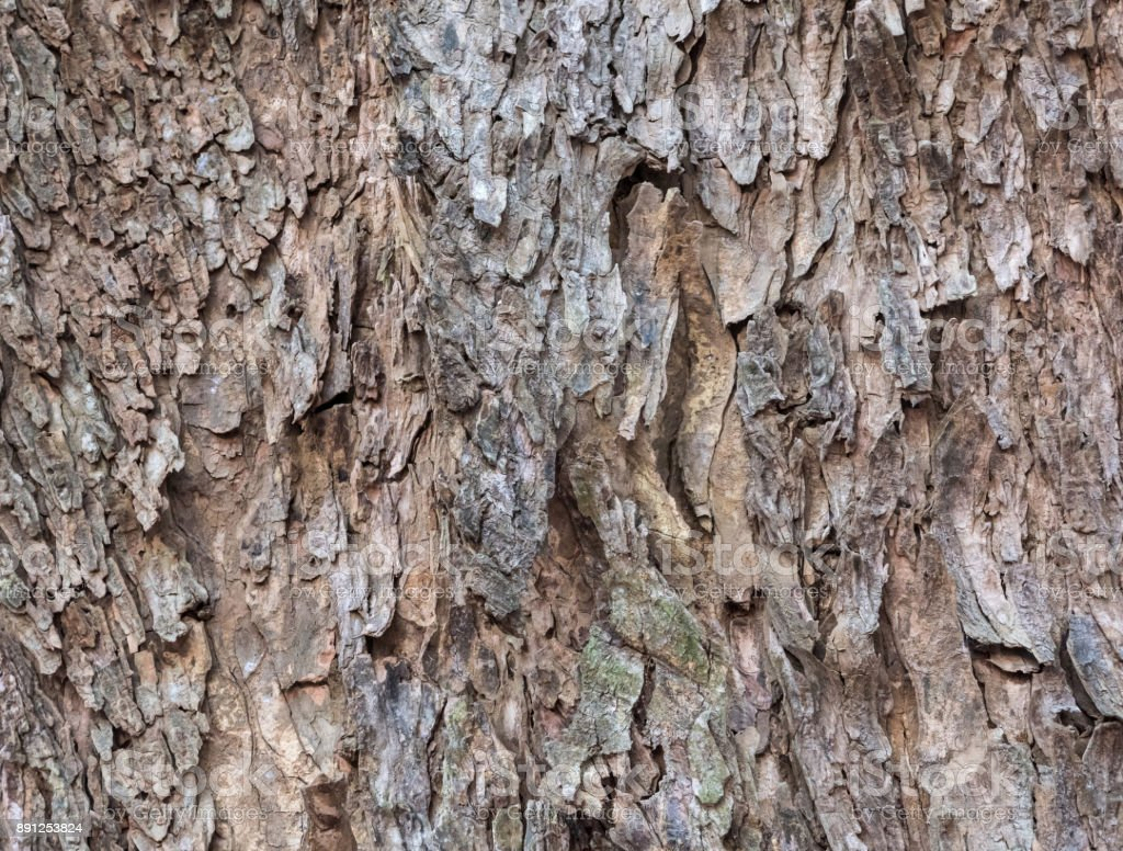 Bark pattern of the large trunk tree. stock photo