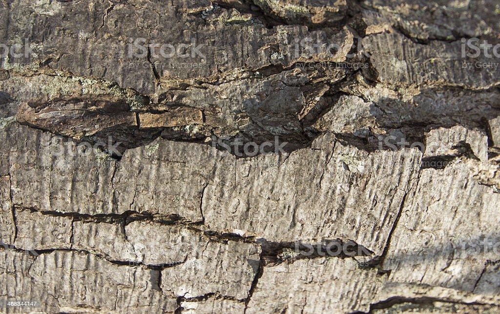 Bark pattern royalty-free stock photo