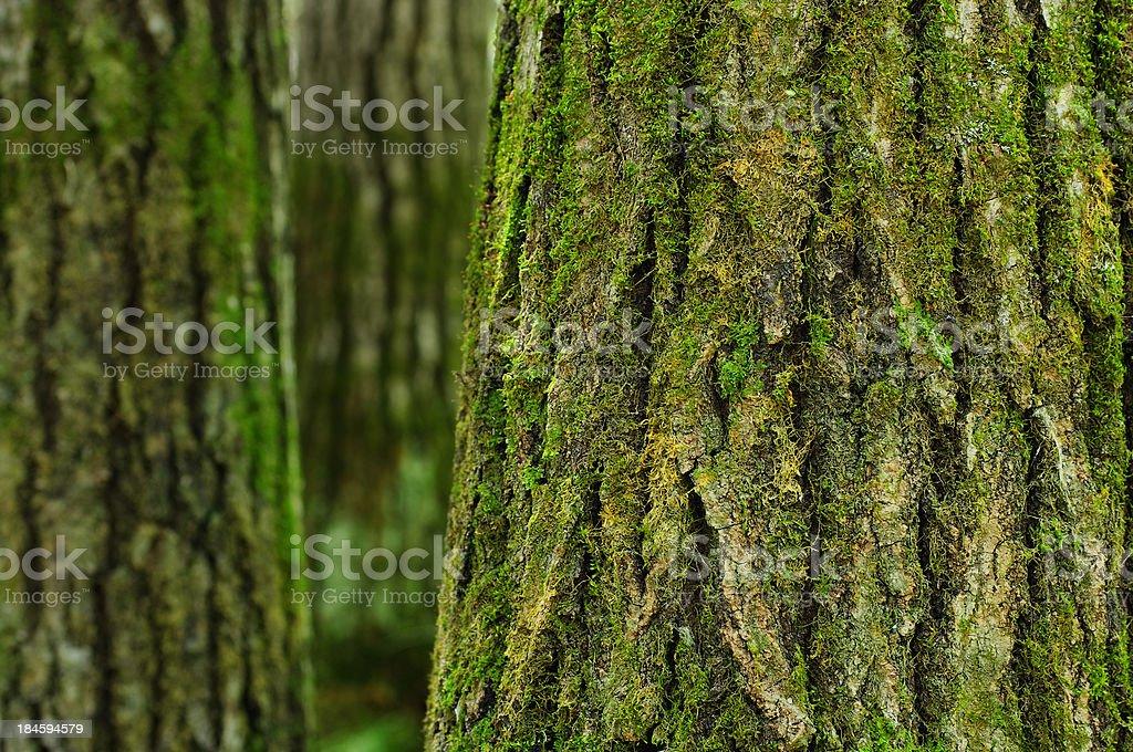 Bark stock photo