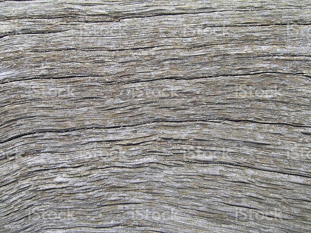 Bark Texture 3 royalty-free stock photo
