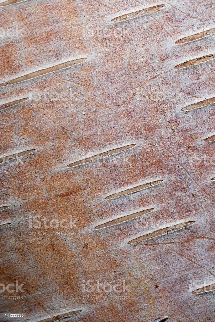 Baumrinde Textur Hintergrund-Pink Birch - Lizenzfrei Abstrakt Stock-Foto
