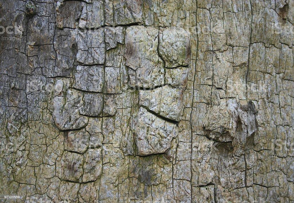 bark texture - burnt oak royalty-free stock photo