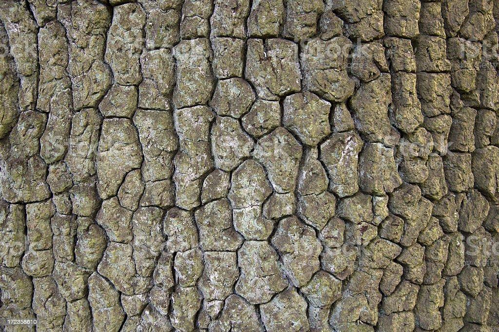 Textura de corteza foto de stock libre de derechos