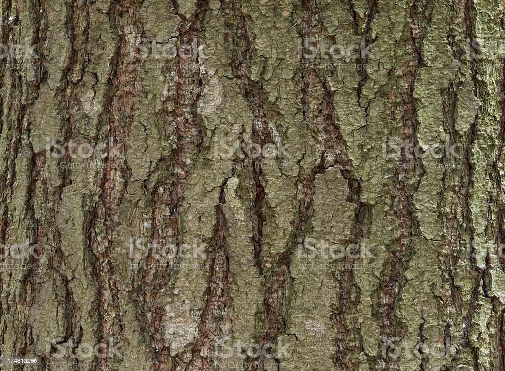 Bark texture royalty-free stock photo
