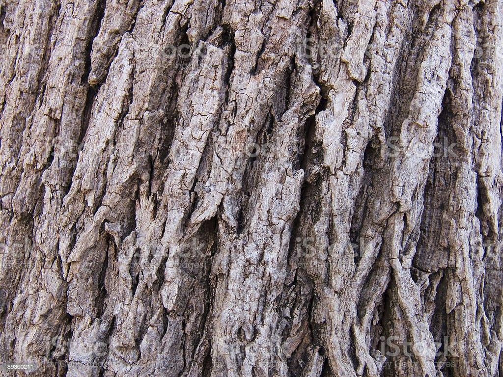 'bark' texture royalty free stockfoto