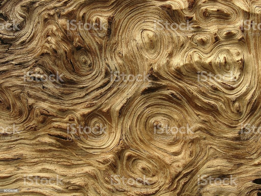 Bark texture royalty-free stock photo