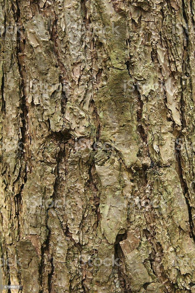 Bark, texture royalty-free stock photo