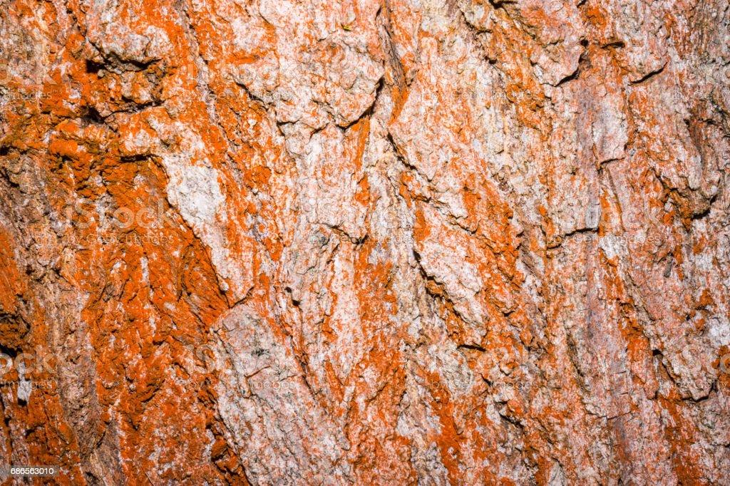 Bark tree background zbiór zdjęć royalty-free
