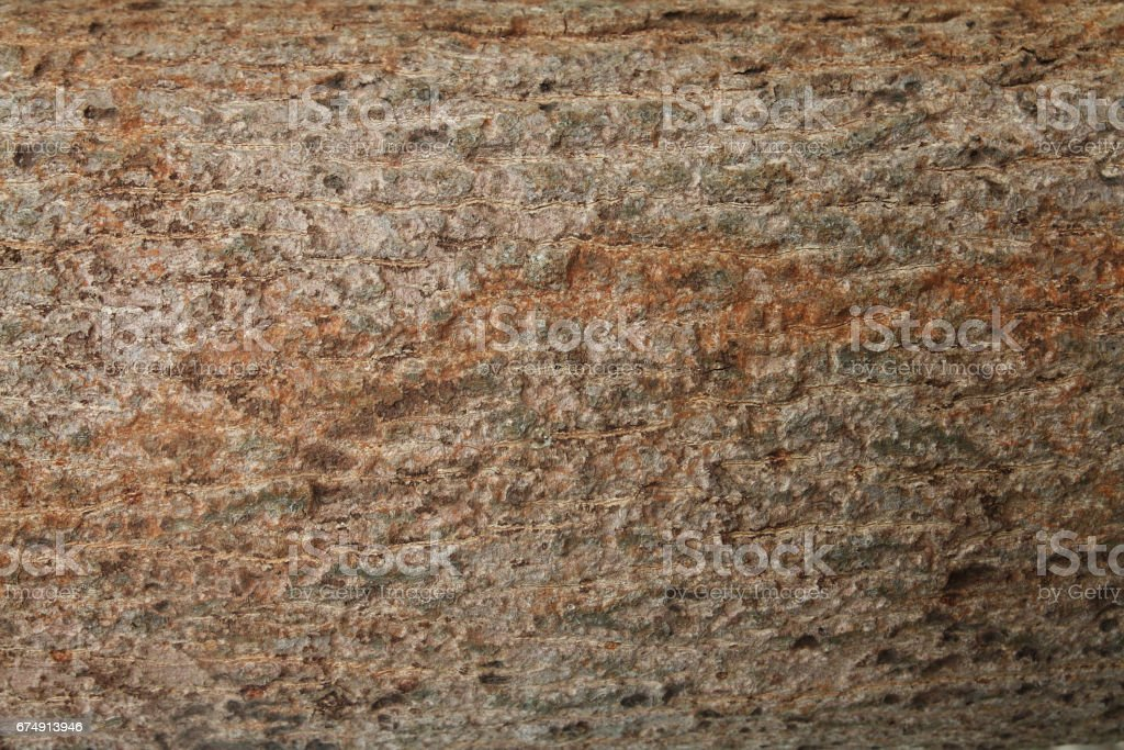 Bark tree texture royalty-free stock photo