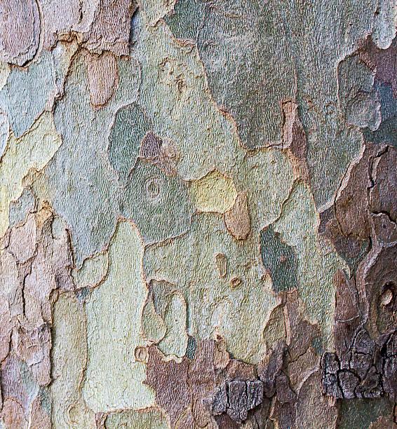 Bark  tree trunk stock photo