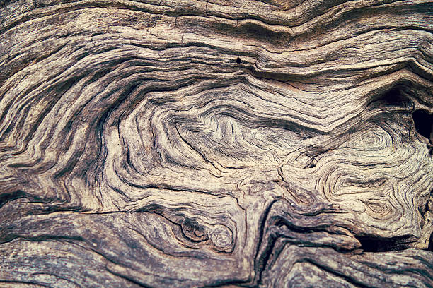 Bark Tree wood texture stock photo