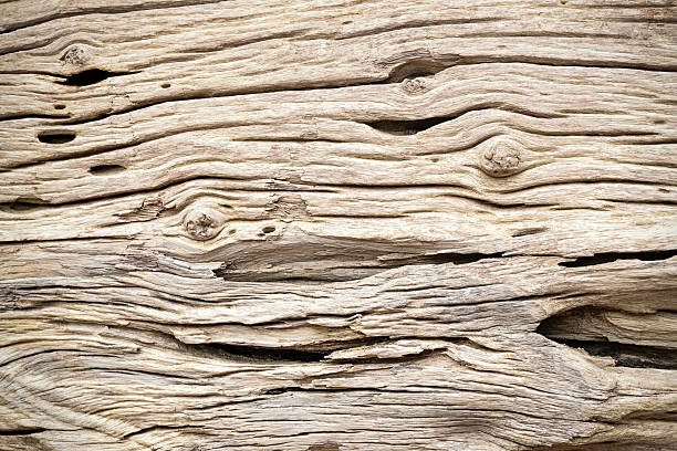Bark Tree wood texture Bark Tree wood texture driftwood stock pictures, royalty-free photos & images