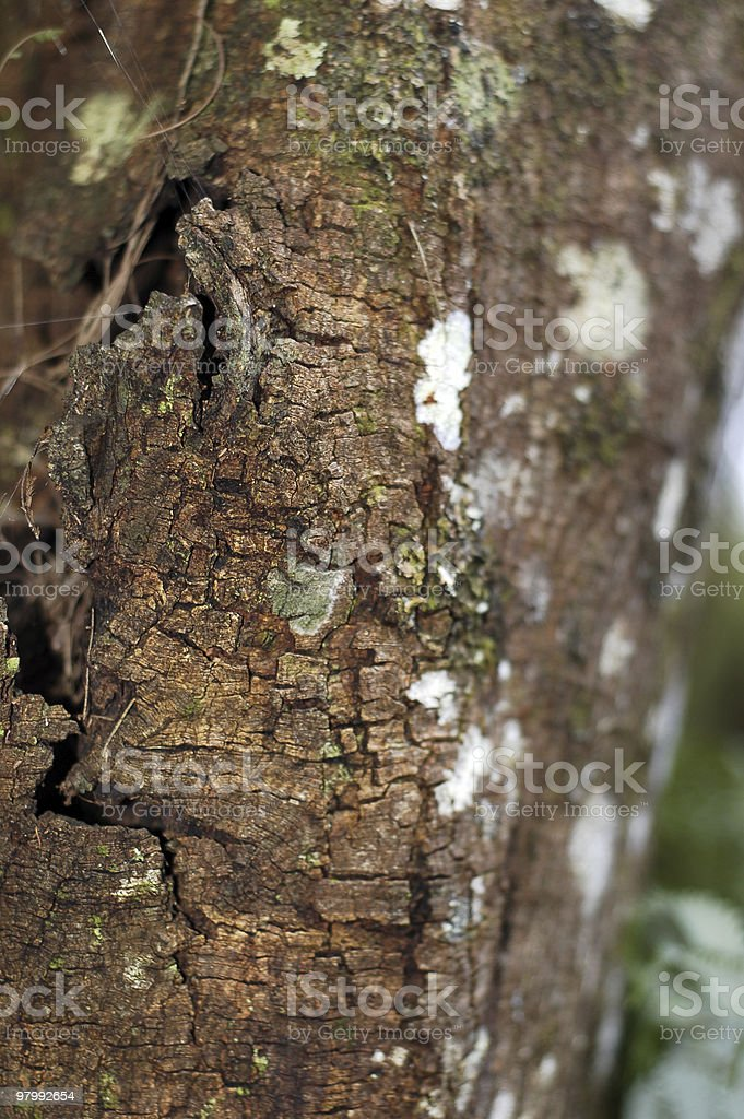 Bark with spider-web royalty-free stock photo