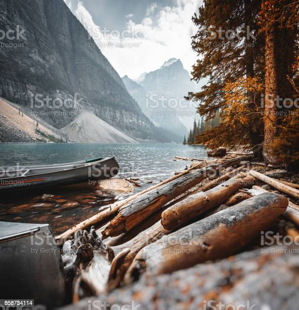 Photo of bark wood in the Moraine Lake at Banff National Park