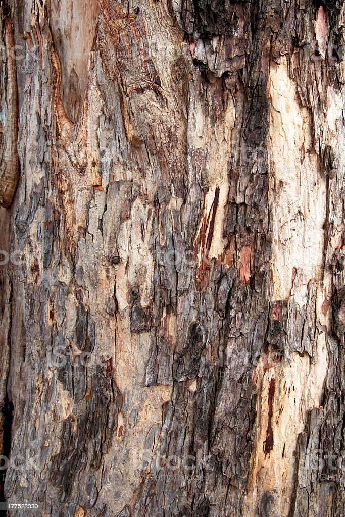 Bark Wooden texture - Pattern of Old tree royalty-free stock photo