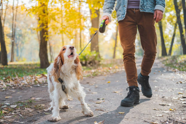 Barking dog on the leash outdoors. stock photo