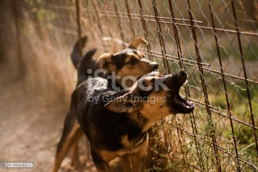 istock Barking Dogs 108220159