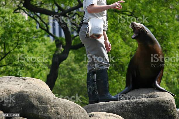 """""""Sea lion barks at trainer's request at Central Park Zoo, New York City."""""""