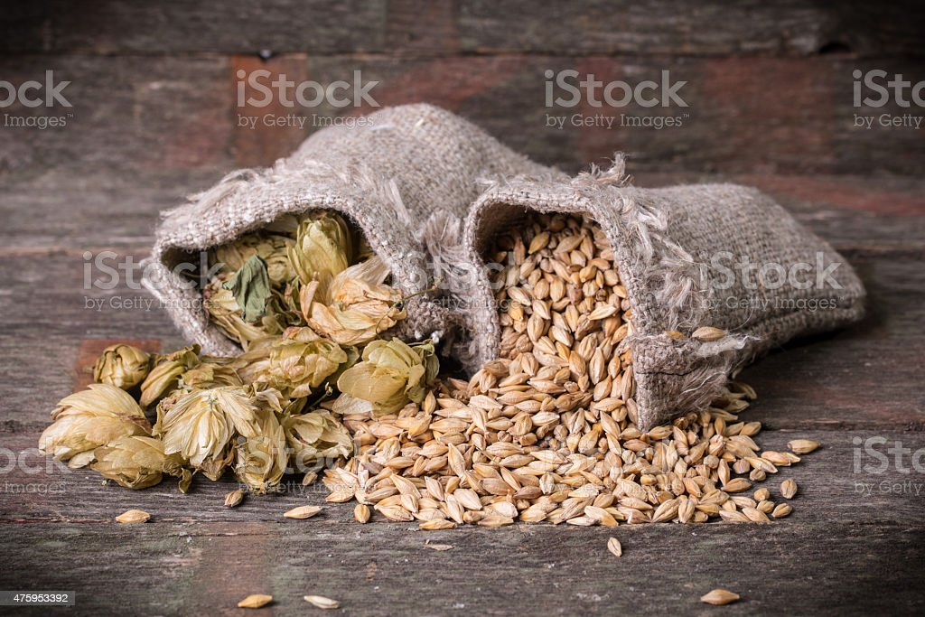 Barley and hops stock photo