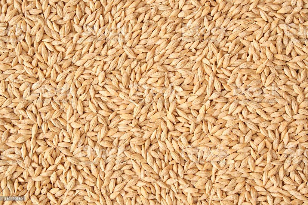 Barley background royalty-free stock photo
