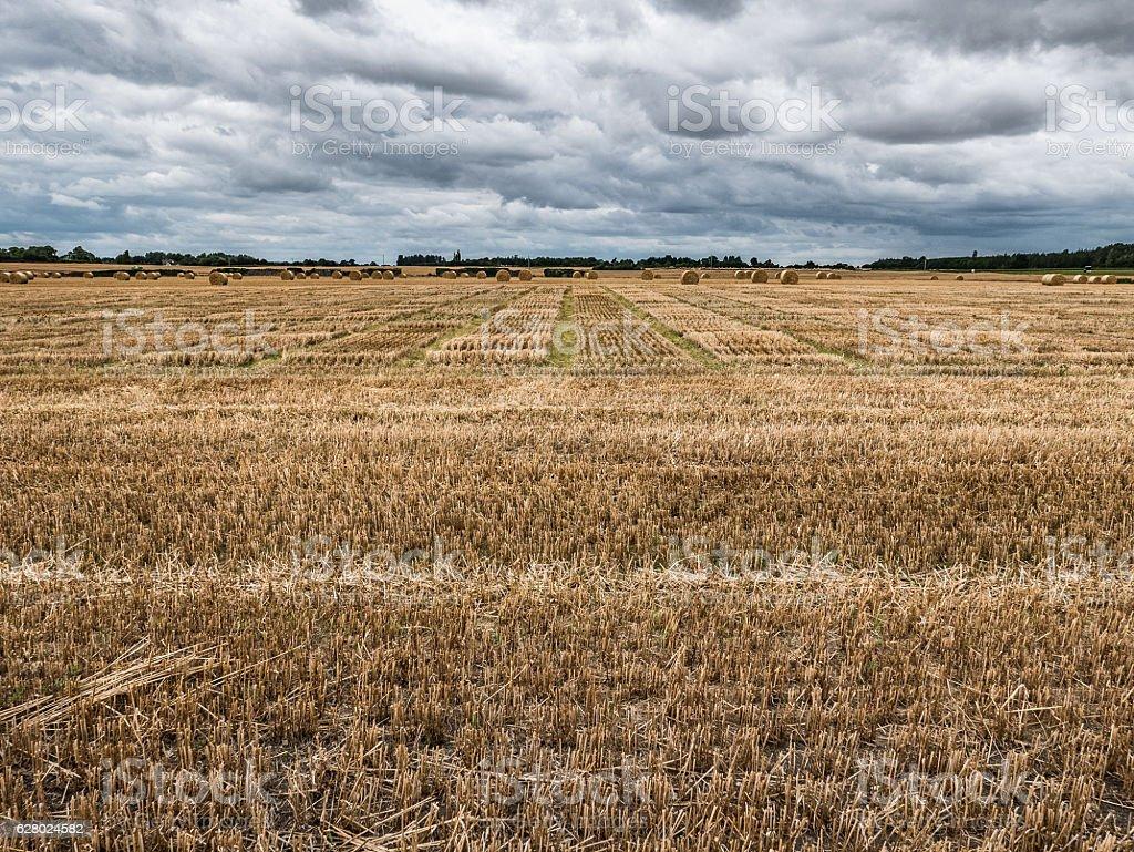 Barley Field, County Carlow stock photo