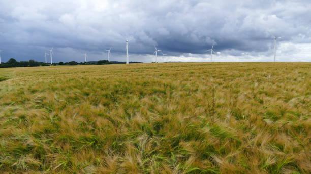 Ein Gerstenfeld mit vielen Windrädern am Horizont – Foto