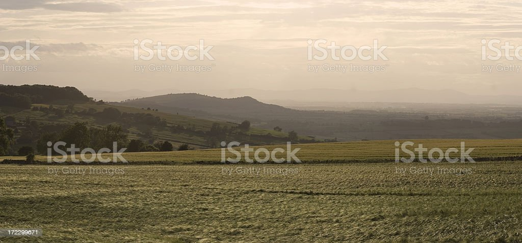 Barley fields in the evening royalty-free stock photo