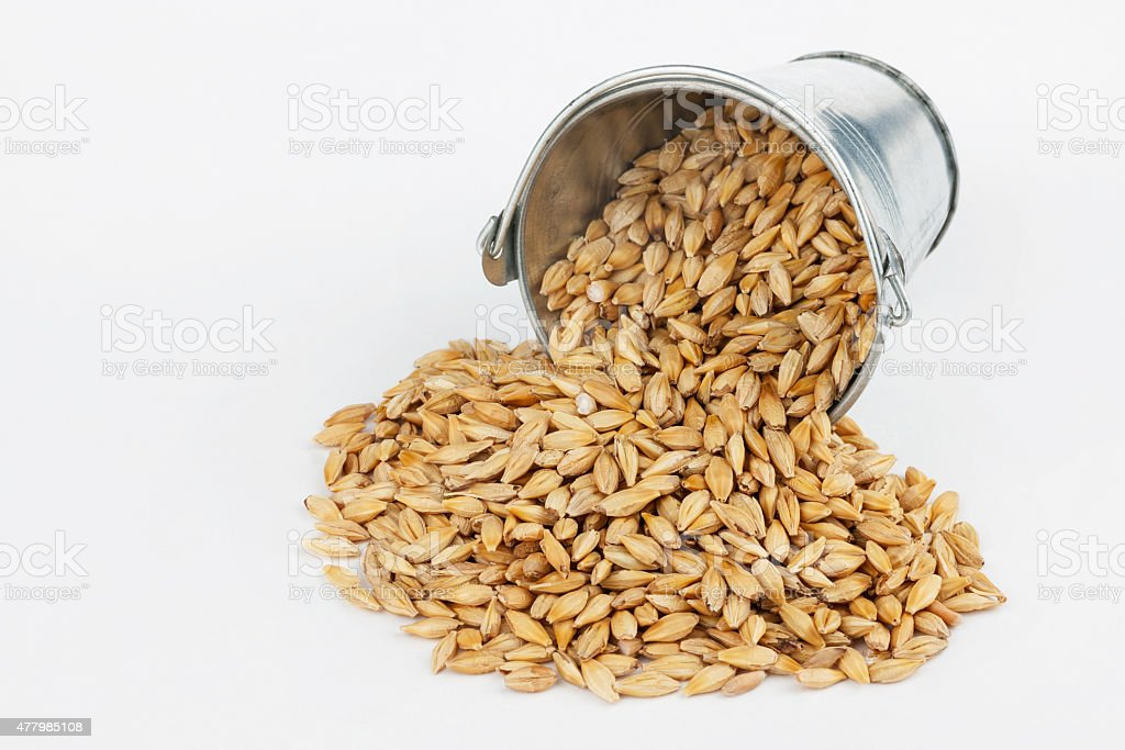 Barley grains spilling out of bucket stock photo