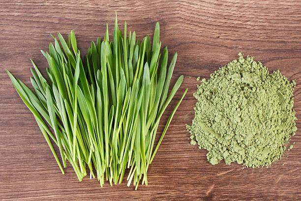 Barley grass and heap of young powder barley, body detox stock photo