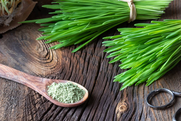 Barley grass powder on a spoon with freshly grown barley grass stock photo